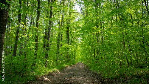 Fotografering Spring deciduous forest, with green trees, grass, and flowering bushes
