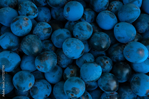 Valokuva Background made of dark blue blackthorn, top view