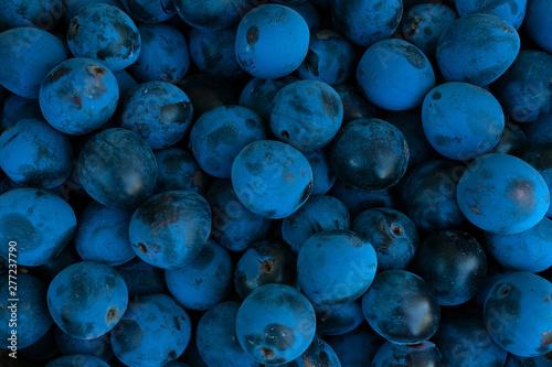 Valokuvatapetti Background made of dark blue blackthorn, top view