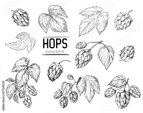 Cuadros en Lienzo Sketch of a hop plant