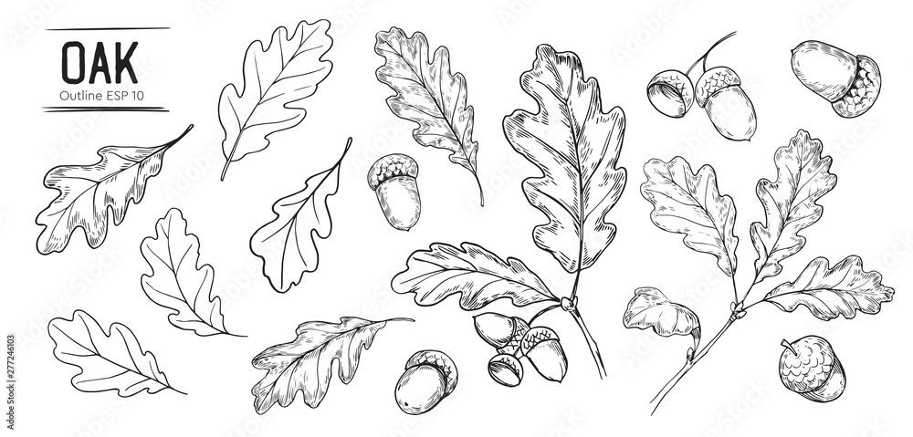 Fotografie, Obraz Set of oak leaves and acorns