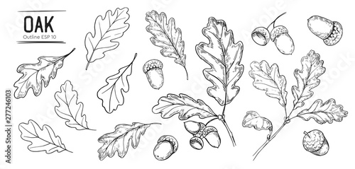 Obraz na plátně Set of oak leaves and acorns