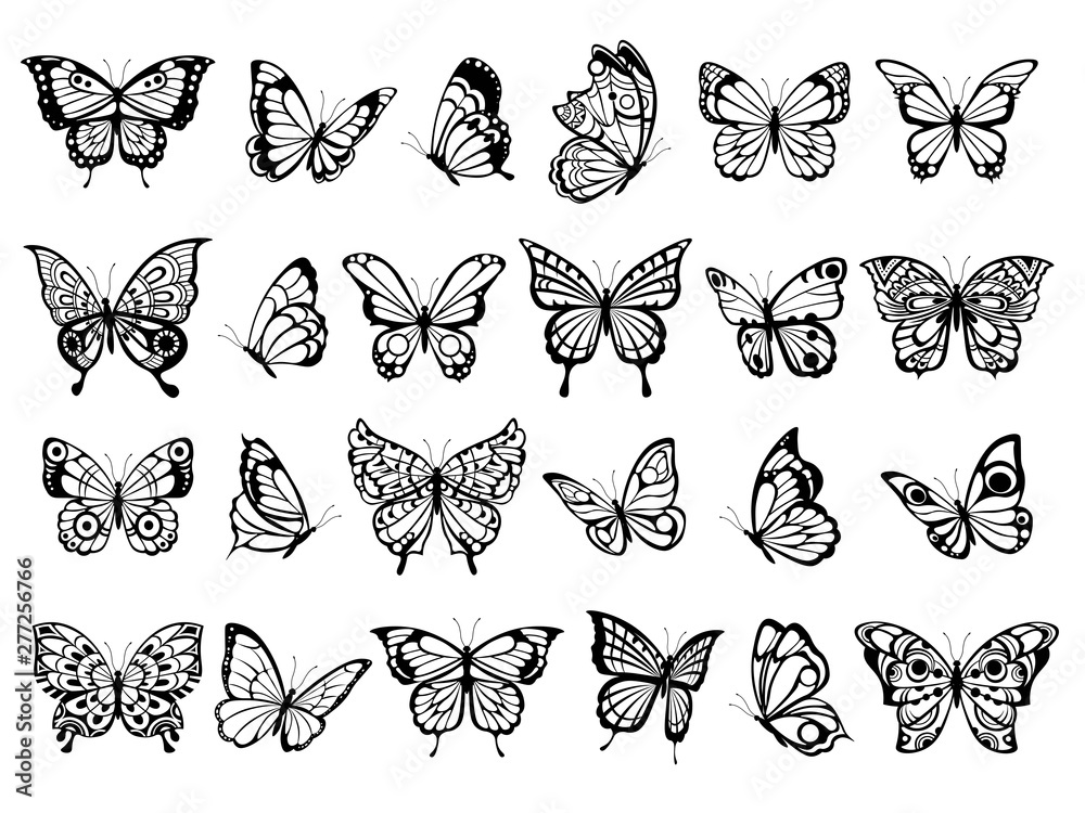 Fototapeta Butterfly collection. Beautiful nature flying insect exotic butterflies with funny wings vector illustration