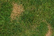 Dead Brown Spots In Green Grass
