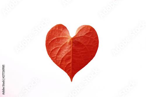 red heart leaf shaped on white background Canvas Print