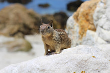 Squirrel Sitting On A Rock At ...