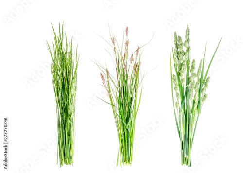 Set of wild green grass on white background.