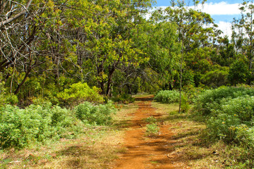 Fototapeta na wymiar Trail to Rano Kao