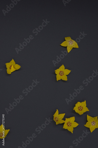 vertical of yellow flowers on black background