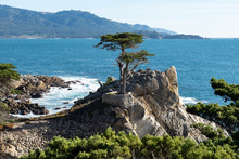 Lone Cypress Tree On 17 Mile Drive. 17 Mile Drive Is A Scenic Road Through Pebble Beach And Pacific Grove On The Monterey Peninsula In Northern California.