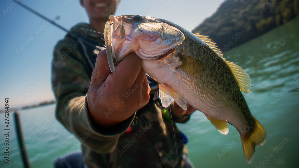 Fototapeta Bass fish in the hand of a fisherman