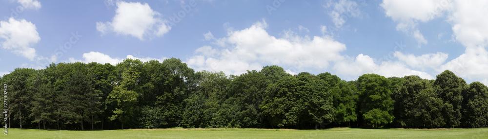 Fototapeta Very high definition Treeline with a colorful blue sky