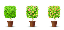 Vector Set. Trees With Bloomin...