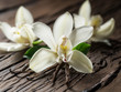 Dried vanilla sticks and vanilla orchid on wooden table.
