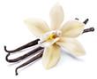 Leinwanddruck Bild - Dried vanilla sticks and orchid vanilla flower isolated on white background.