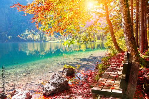 Fotobehang Herfst Bench and yellow autumn trees on the shore of lake in Alps, Austria. Beautiful autumn landscape