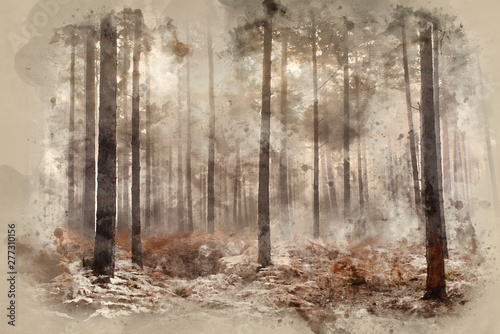 Digital watercolour painting of Pine forest Autumn Fall landscape foggy morning Wallpaper Mural