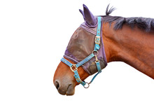 Side Profile View Of A Brown Horse Head Wearing A Mesh Fly Mask And Head Collar Isolated On White Background