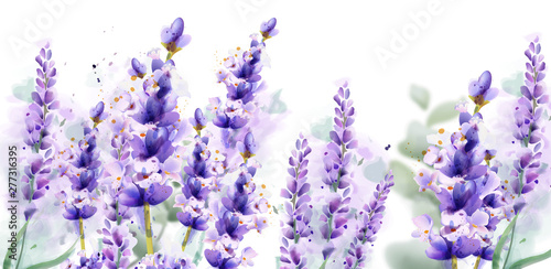 Fototapeta Lavender watercolor background Vector. Delicate floral bouquet on white background. Spring summer banner templates obraz