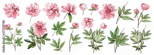 Obraz na plátně  Pink peonies