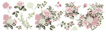 Drawing With Watercolor Bouquet Of Roses And Buds. Botanical Illustration. Composition Of Pink Roses And Garden Herbs.