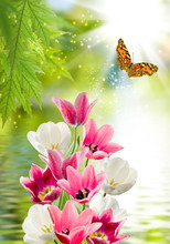 Flower Over Water And Butterfly Close Up