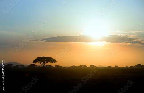 Foto op Plexiglas Afrika Colorful african landscape with silhouettes of acacia trees against vibrant african sunset at the foot of a volcano Kilimanjaro, Amboseli, Kenya.