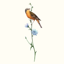 Watercolor Vector Bird On The ...