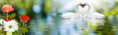 Keuken foto achterwand Zwaan image of swans on the water in the park close up