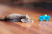 Cute Little Cat Of Tabby Color Lies On The Wooden Floor With Children Toy Car. Pretty Kitten With Yellow Eyes At Home. Indoors, Close Up, Copy Space.