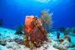 canvas print picture - Coral reef and fish in Cozumel Mexico