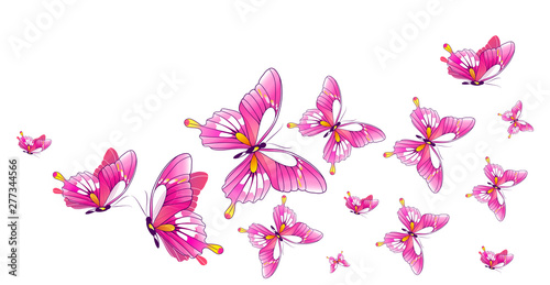 Fototapeta  butterfly128