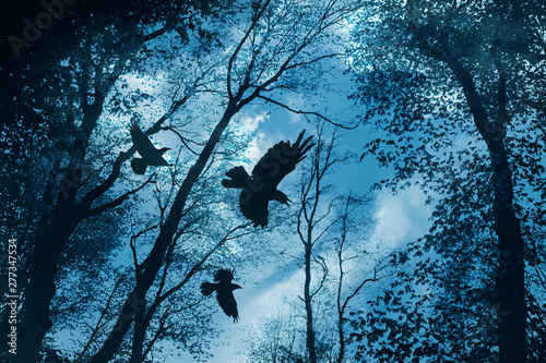 black crows flying in dark mysterious forest
