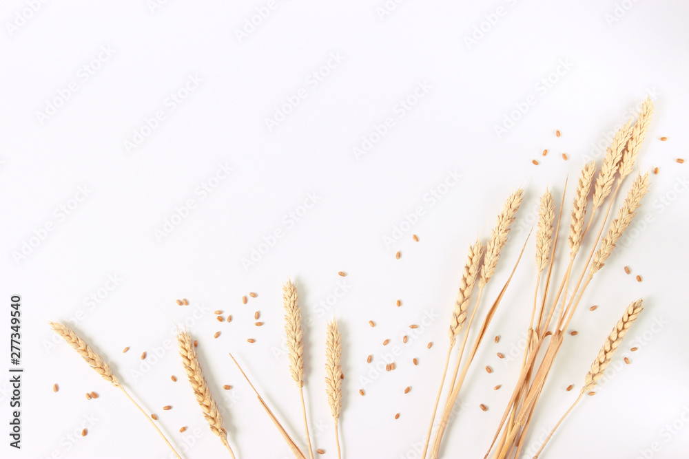 Fototapety, obrazy: spikelets of wheat on a white background