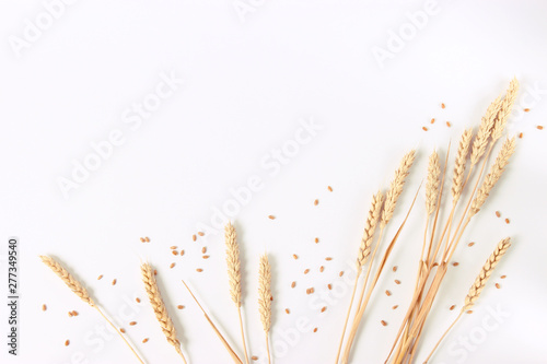 spikelets of wheat on a white background Tapéta, Fotótapéta