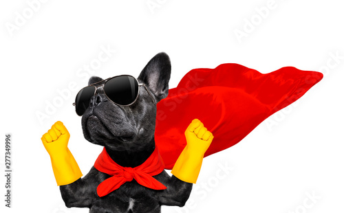 Tuinposter Crazy dog super hero dog