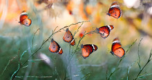 Closeup   Beautiful Butterflies Sitting On Flower