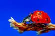 canvas print picture - Beautiful ladybug on leaf defocused background