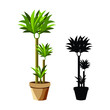 Vector realistic detailed house plant for interior design and decoration.Tropical plant for interior decor of home or office.Color and outline.