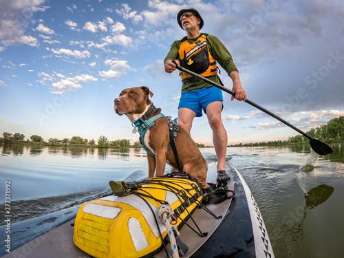 Obraz na plátne stand up paddling with a pitbull dog