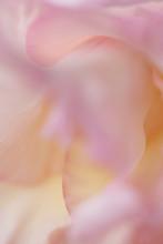 Blume Makro Abstrakt Rosa