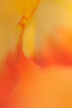 Abstrakte Blumen Makro
