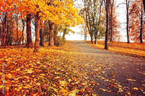 Autumn landscape - orange park trees and fallen autumn leaves on the road in city park in sunny autumn evening