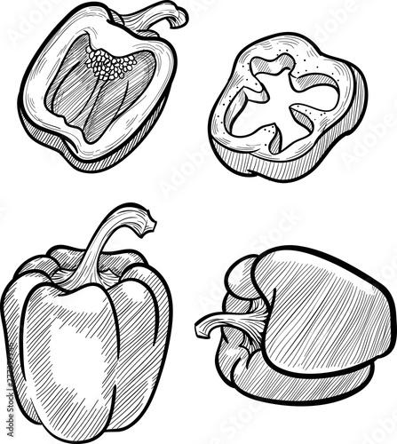 Carta da parati Bell Pepper Sketch
