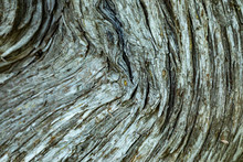 Old Wood Bark Macro Backgrounds.