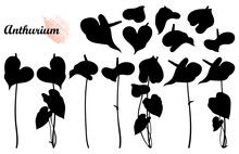 Set With Silhouette Of Tropical Plant Anthurium Or Anturium Flower Bunch And Leaves In Black Isolated On White Background.