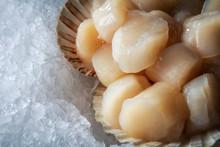 Sea Delicacies. Fresh Seafood....