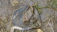 23388_Top_look_of_the_cap_on_the_muddy_part_of_the_forest.mov