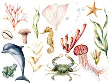 Watercolor Sea Life Set. Hand ...