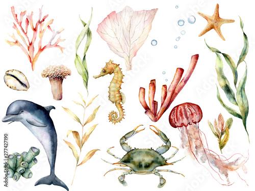 Fotografie, Obraz  Watercolor sea life set